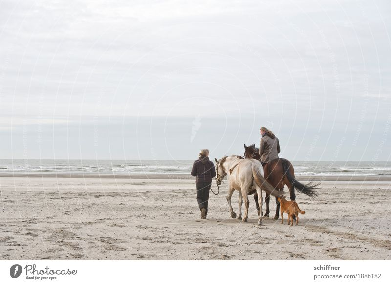 Belgian Day at the Sea II Human being Feminine Woman Adults 2 Clouds Waves Coast Beach Animal Pet Dog Horse 3 Going Ride Covered Wind Horse lover Horseback