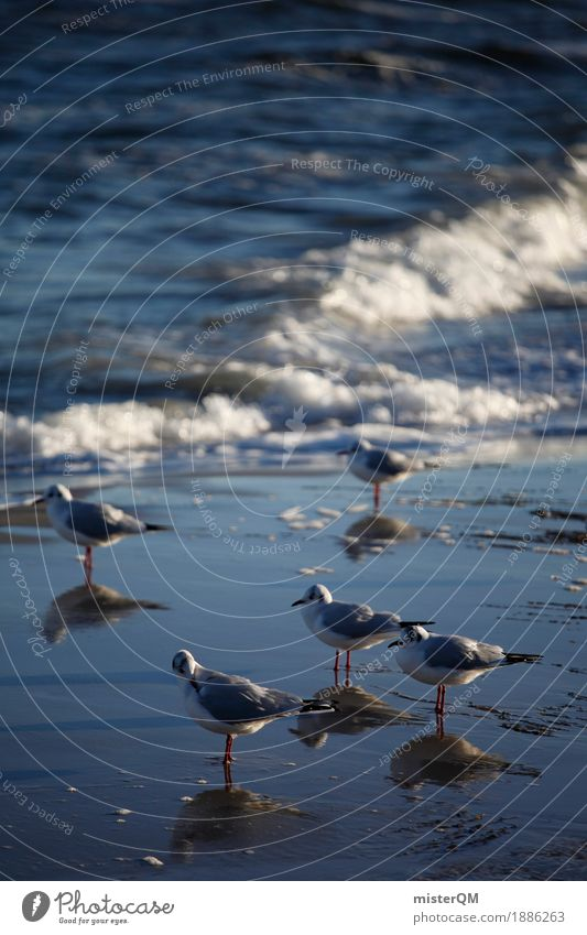 Cold feet. Nature Esthetic Gull birds Seagull Reflection Sea water Coast Water 5 Feet Animal foot Feet up Colour photo Multicoloured Exterior shot Abstract