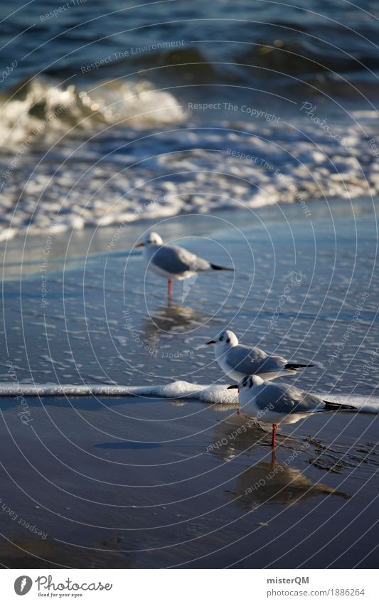 Gaffer V Nature Esthetic Gull birds Seagull Reflection Bird Coast Sea water Animal Colour photo Subdued colour Exterior shot Close-up Abstract Deserted