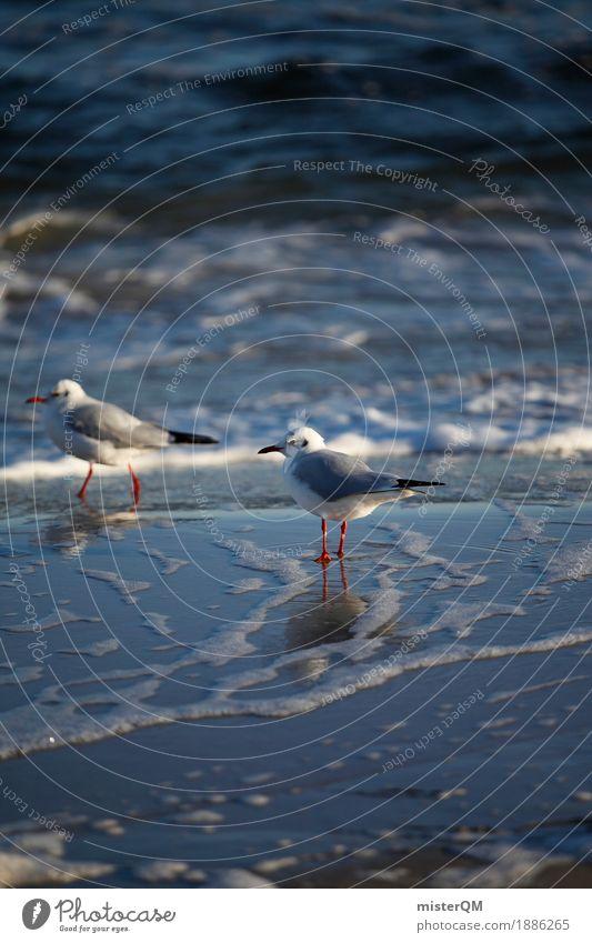 Gaffer IV Nature Esthetic Seagull Gull birds Seagull droppings Ocean Coast Bird Stand Wait Sea water Reflection Colour photo Multicoloured Exterior shot