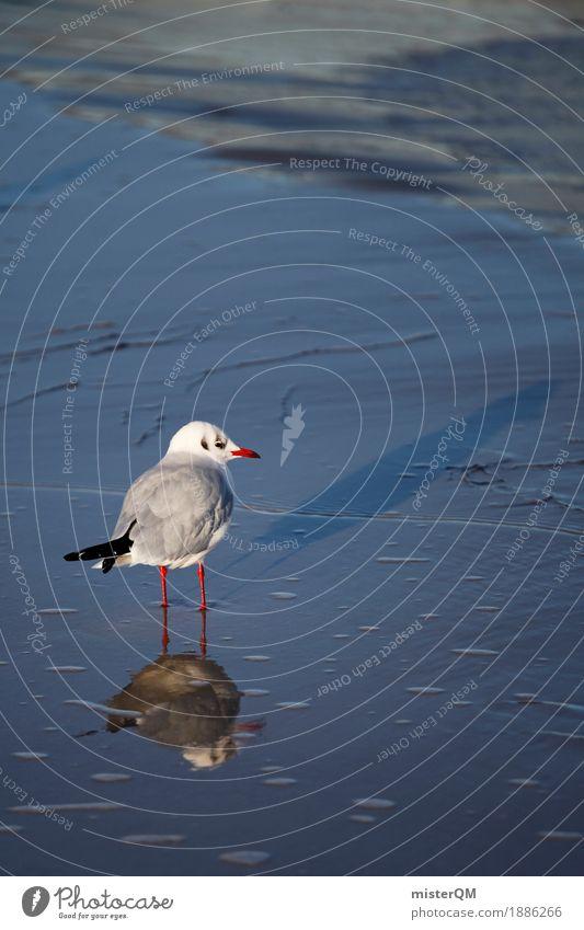 Nature Animal Coast Bird Esthetic Seagull Gull birds Sea water Beach life