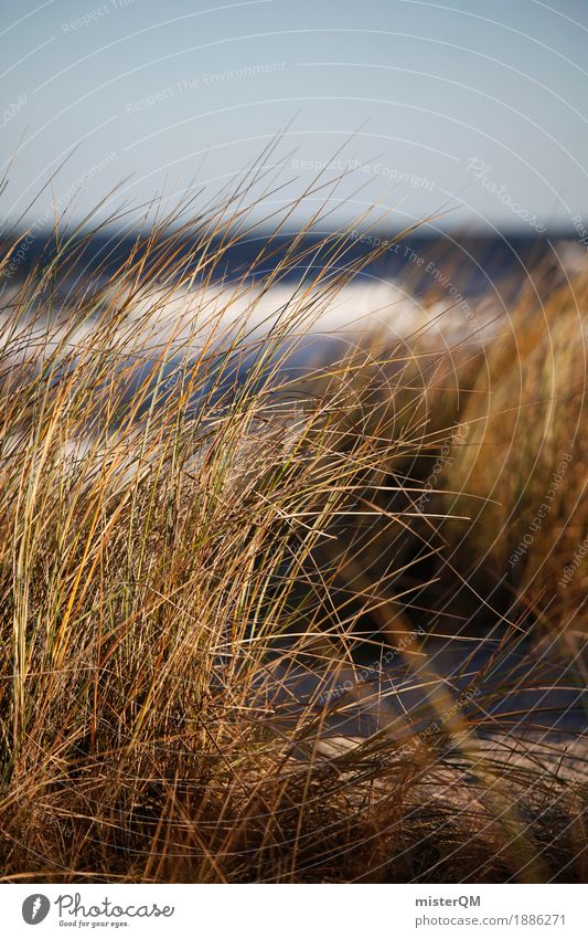 Dune grass IV Nature Esthetic Contentment Vacation photo Grass Marram grass Blow Wind Calm Baltic Sea Baltic island Coast Remote Colour photo Subdued colour