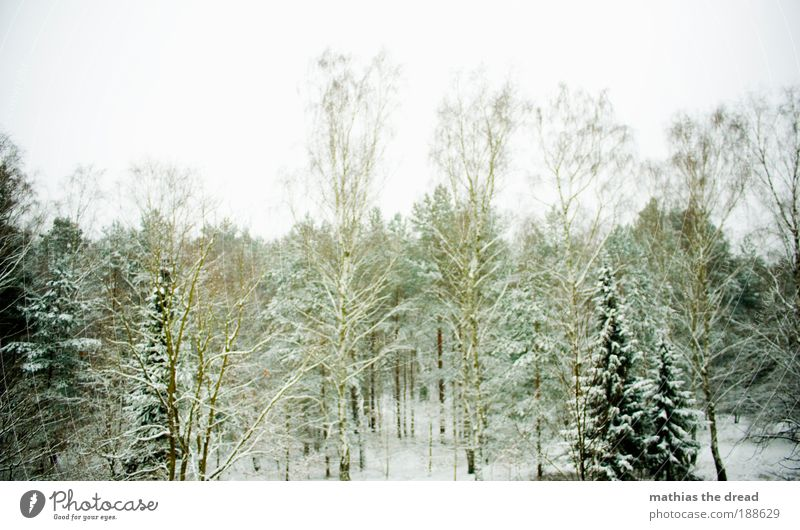 Sky Nature Beautiful White Plant Tree Landscape Winter Forest Cold Environment Snow Grass Horizon Ice Weather