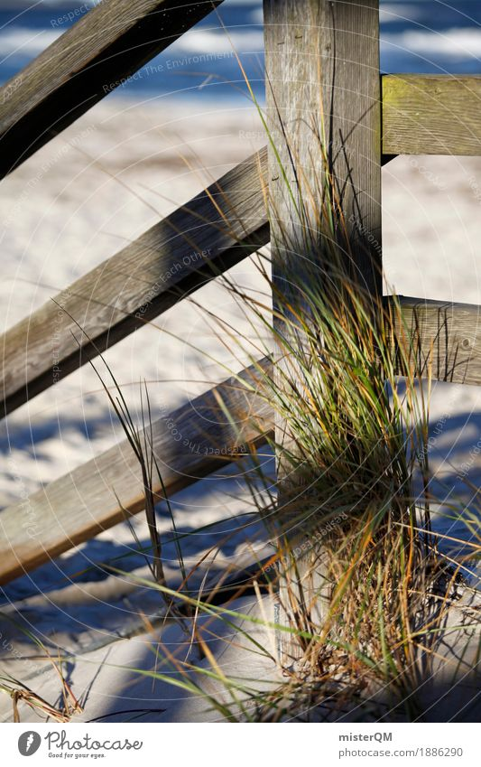 Beach Life I Nature Esthetic Baltic Sea Baltic island Beach dune Beach life Sand Coast Ocean Colour photo Subdued colour Exterior shot Detail Experimental