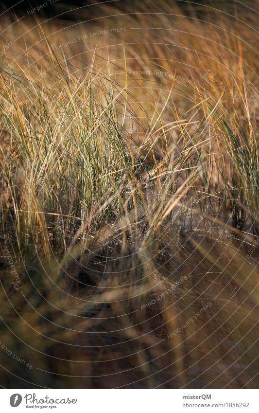 Dune grass III Nature Esthetic Wind Calm Blow Grass Marram grass Baltic Sea Baltic island Green Coast Colour photo Multicoloured Exterior shot Interior shot