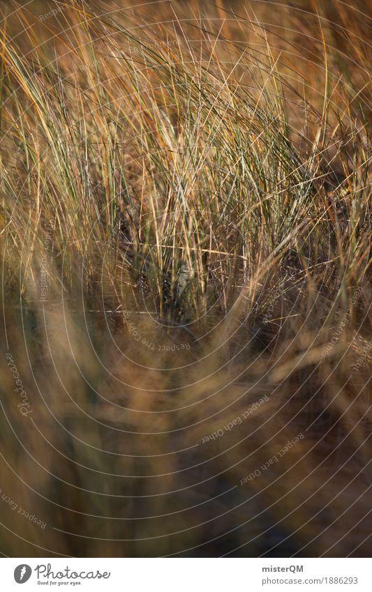 Dune grass II Art Work of art Esthetic Baltic Sea Nature Exterior shot Baltic island Grass Marram grass Wind Blow Calm Coast Colour photo Subdued colour