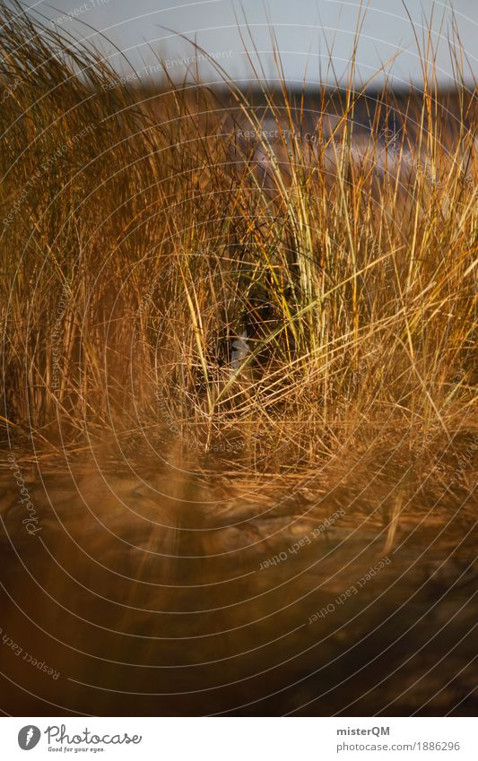 Dune grass I Art Esthetic Grass Marram grass Baltic Sea Baltic island Air Wind Calm Colour photo Multicoloured Exterior shot Close-up Detail Experimental