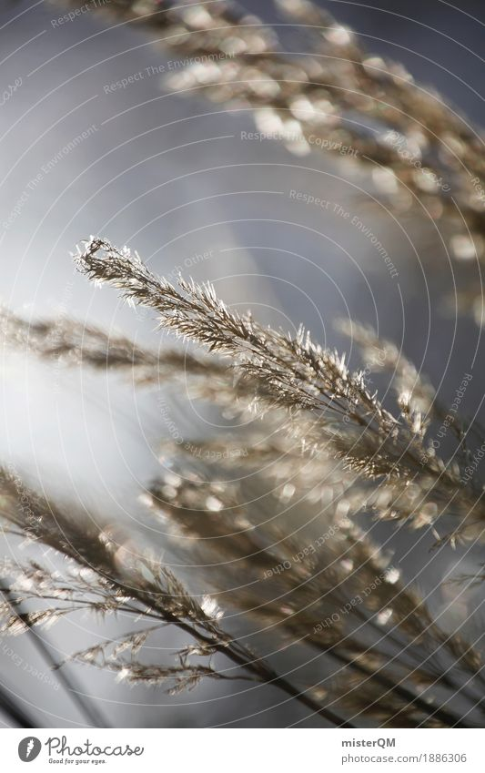 Wind dancer. Art Esthetic Blow Grass Decent Growth Nature Nature reserve Grain Grain field Grass blossom Idyll Peaceful Colour photo Multicoloured Exterior shot