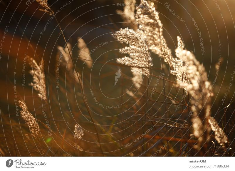 Golden reed. Art Esthetic Common Reed Blow Wind Calm Sunbeam Idyll Peaceful Sustainability Nature Exterior shot Nature reserve Love of nature Grass Meadow