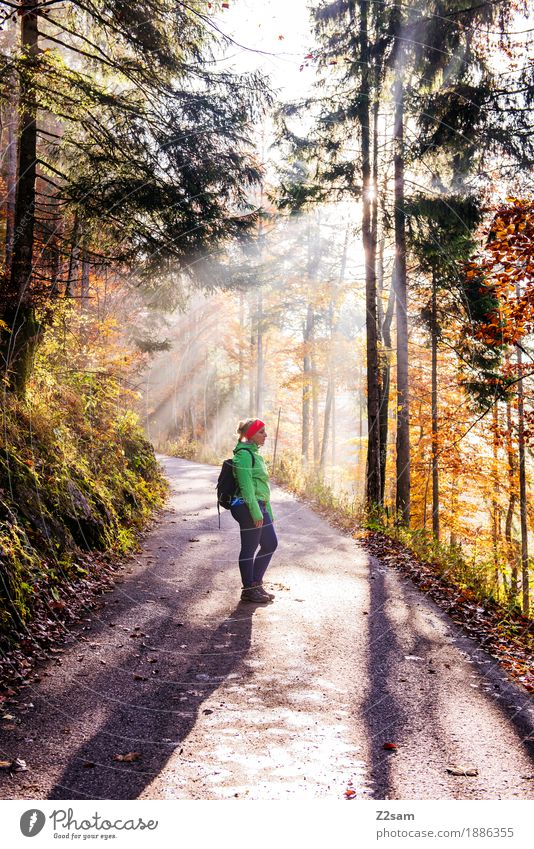 enlightenment Adventure Mountain Hiking Sports Young woman Youth (Young adults) 18 - 30 years Adults Nature Sun Autumn Beautiful weather Tree Bushes Forest Alps