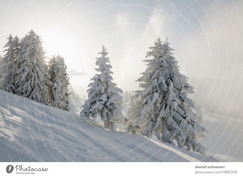 Vacation & Travel Nature Sun Tree Loneliness Calm Winter Mountain Environment Cold Snow Tourism Bright Alps Winter vacation