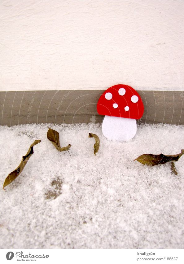 Little Red Riding Hood Animal Bad weather Ice Frost Snow Plant Mushroom Amanita mushroom Leaf Freeze Stand Cold Gray White Point Winter felt mushroom leaves
