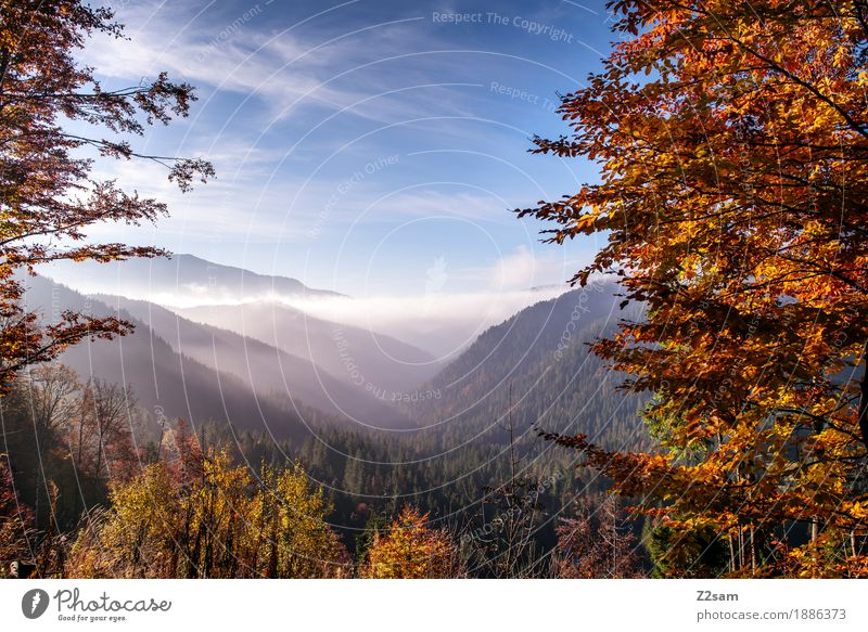Sky Nature Colour Tree Landscape Clouds Forest Mountain Environment Autumn Natural Sports Horizon Fog Hiking Fresh