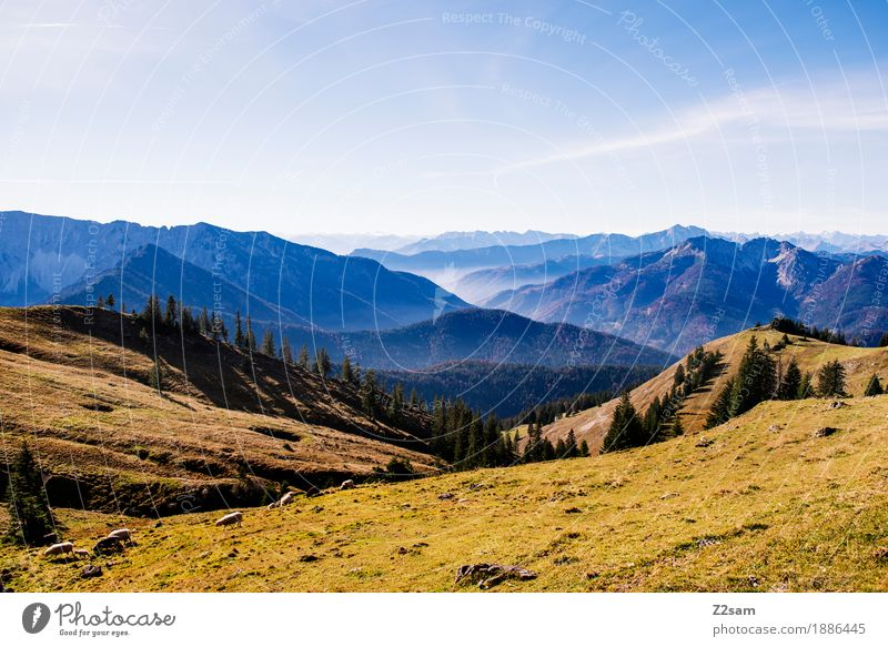 Direction AUT Adventure Mountain Hiking Environment Nature Landscape Autumn Beautiful weather Meadow Alps Peak Natural Green Leisure and hobbies Horizon Idyll