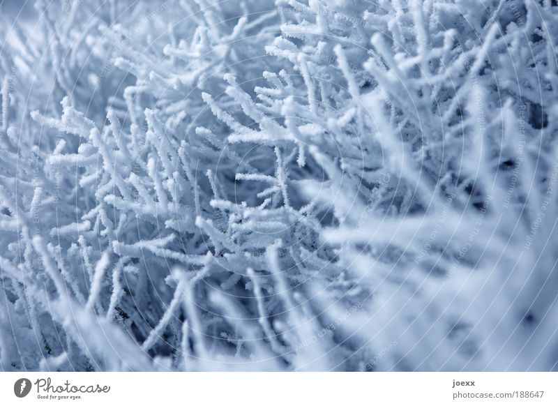 snow corals Nature Weather Snow Cold Blue White Branch Winter Winter mood Colour photo Subdued colour Exterior shot Detail Day