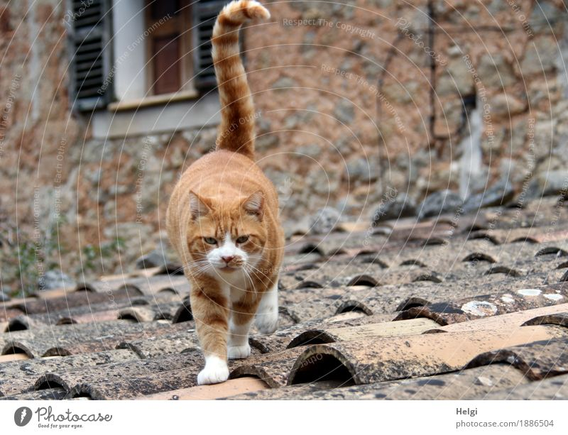 Cat Old White Animal Window Environment Wall (building) Life Building Wall (barrier) Freedom Gray Brown Authentic Island Walking