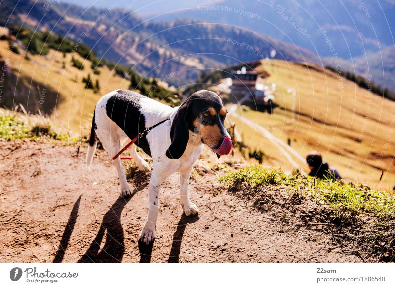 Nature Dog Green Landscape Relaxation Calm Far-off places Mountain Environment Autumn Lifestyle Sports Contentment Idyll Stand To enjoy