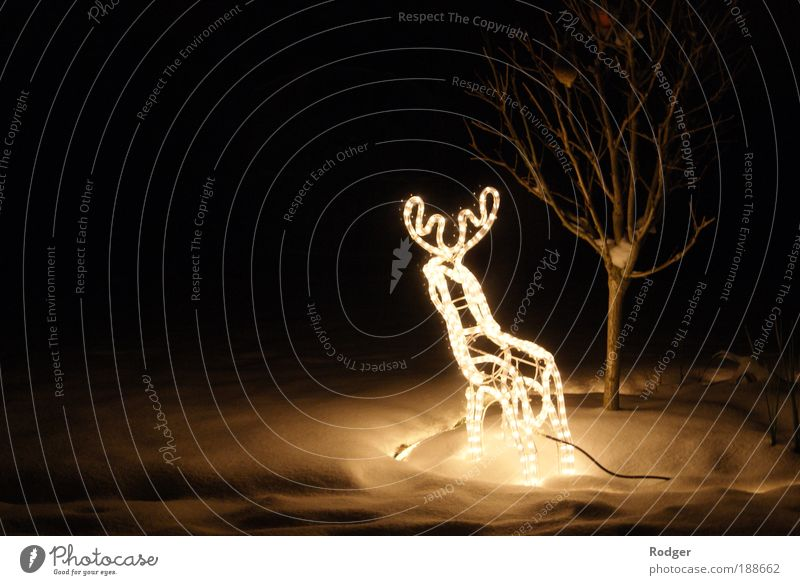Reindeer in the snow Winter Snow Feasts & Celebrations 1 Animal Fairy lights Illuminate Moody Colour photo Exterior shot Deserted Copy Space left Evening