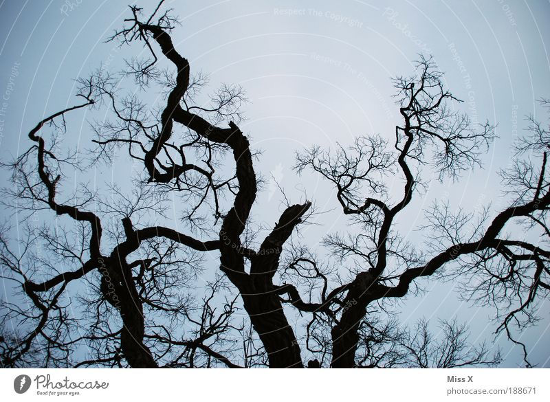 Sky Nature Old Tree Winter Forest Environment Death Sadness Park Weather Climate Large Broken Threat Branch