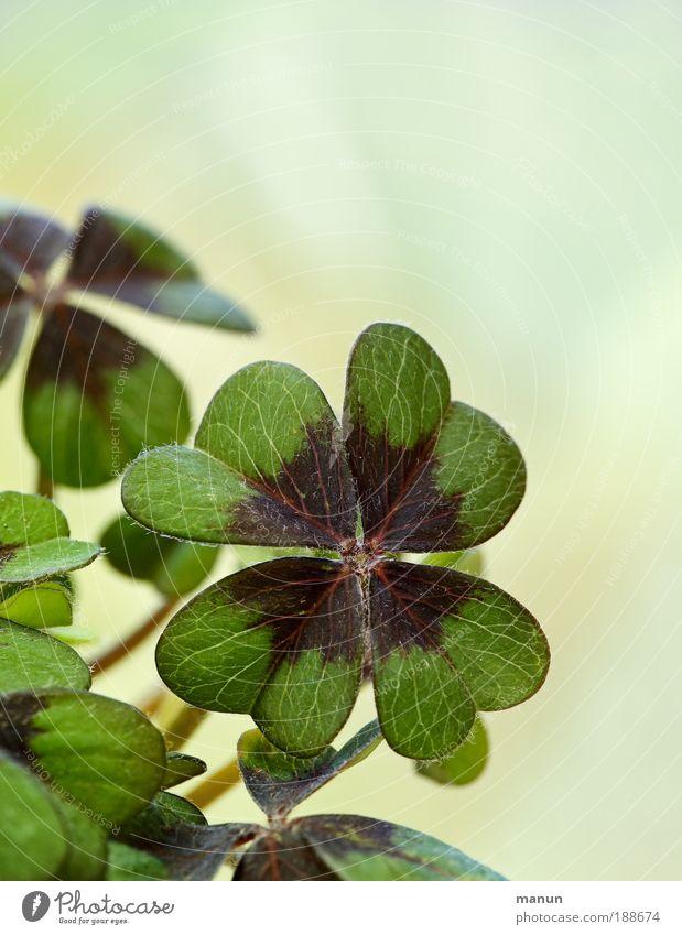 Nature Green Plant Summer Leaf Emotions Spring Happy Success Fresh Hope Happiness Future Desire Joie de vivre (Vitality) Sign