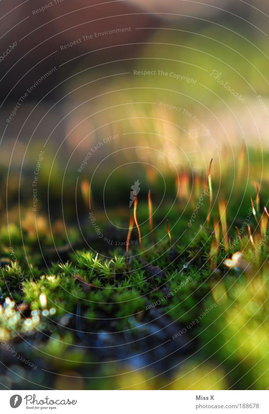moss Environment Nature Summer Autumn Plant Moss Park Meadow Growth Thin Small Wet Green Idyll Colour photo Multicoloured Exterior shot Detail
