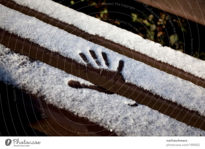 first snow Environment Nature Winter Climate Beautiful weather Snow Park Wood Crystal Footprint Esthetic Cold New Brown Silver White Moody Joy Romance Calm