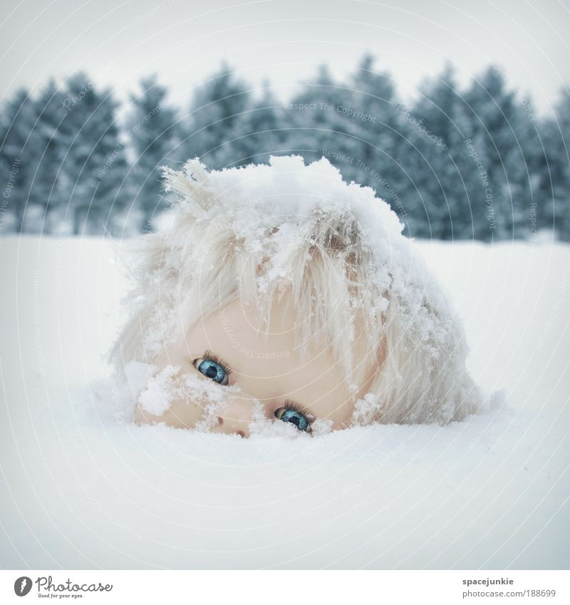 daisy Nature Landscape Storm Ice Frost Snow Tree Hill Doll Observe Dark Creepy Cold Crazy Pain Fear Whimsical Surrealism Grief Transience Lose Disaster Sadness