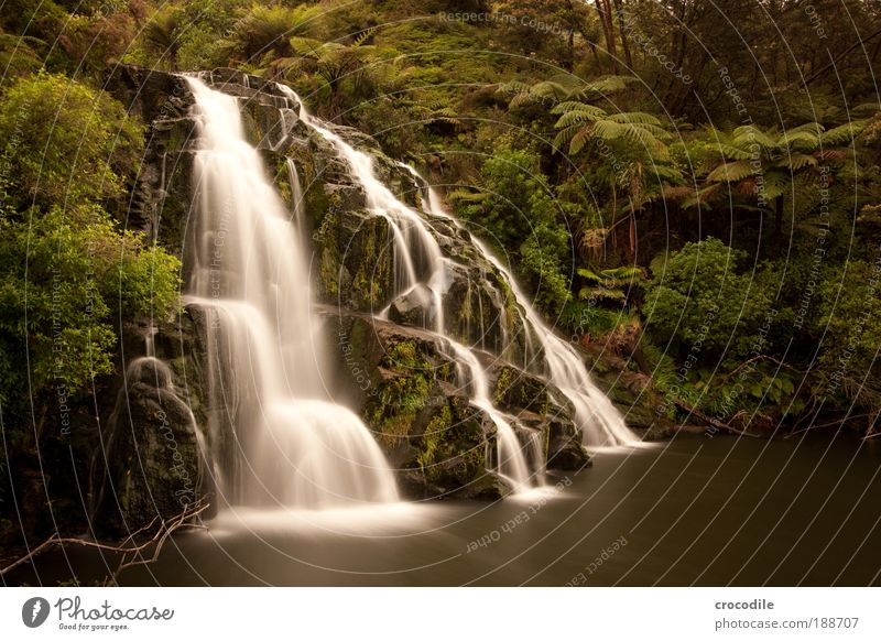 Waterfall New Zealand #1 Environment Nature Landscape Plant Drops of water Tree Bushes Moss Fern Virgin forest Pond Brook Esthetic Beautiful Power Colour photo