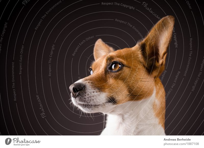 Human being Dog Animal Background picture Agriculture Pet Workshop Animal face Image (representation) Forestry Smart Farm animal Terrier Russell