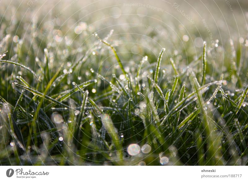 Nature Water Green Plant Winter Calm Meadow Grass Ice Environment Drops of water Wet Earth Hope Frost Blur