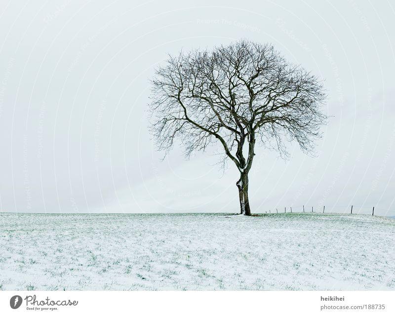 Nature Sky Plant Winter Calm Snow Meadow Landscape Environment Horizon Earth Hill