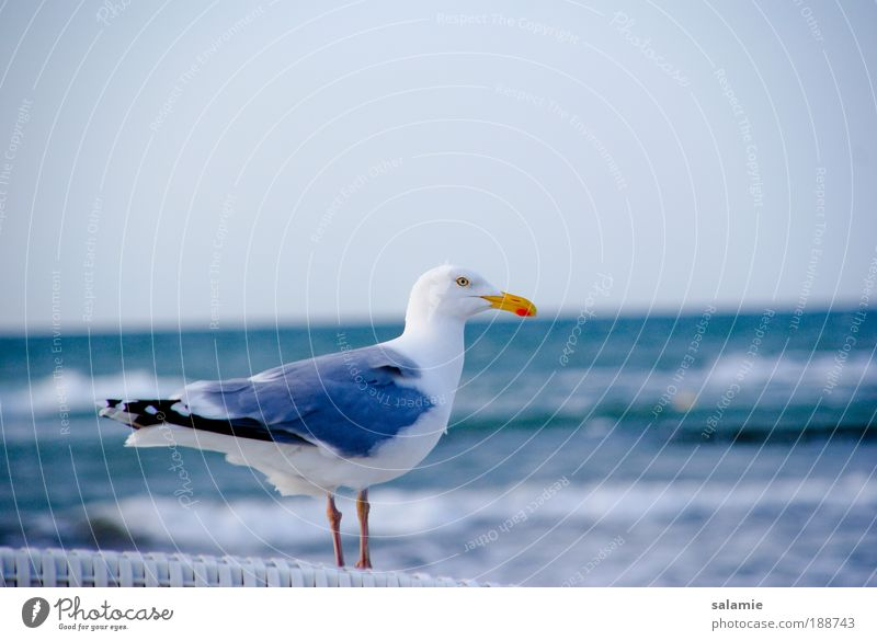 Looking ahead Water Waves Coast Baltic Sea Animal Wild animal Bird Seagull 1 Near Curiosity Colour photo Exterior shot Deserted Copy Space right Day