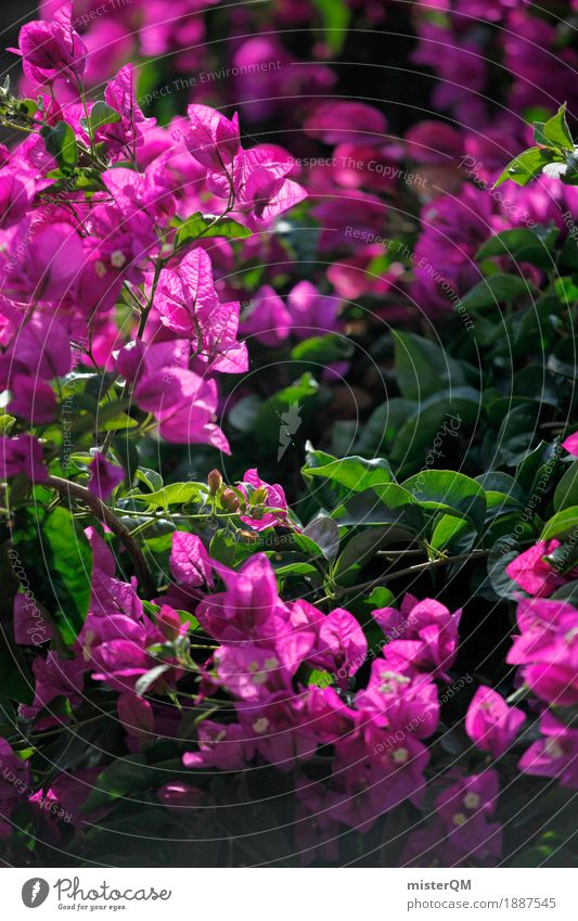 Plant flower art pink a royalty free stock photo from photocase mightylinksfo