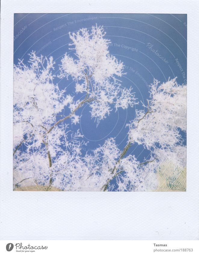 Nature Sky White Plant Winter Calm Snow Contentment Romance Branch Transience Decline Light Twig Hoar frost Enchanting