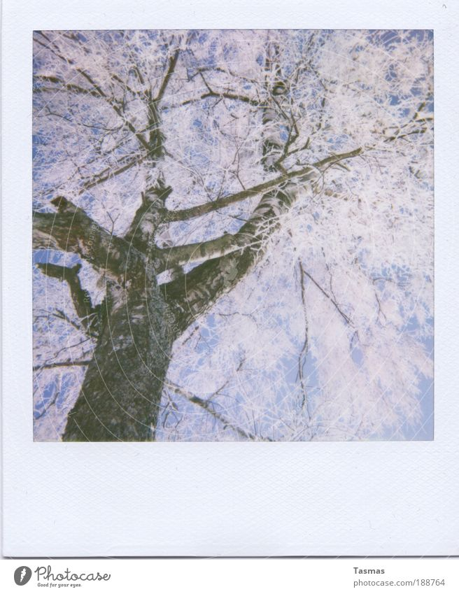 Nature Sky White Tree Plant Winter Calm Environment Time Romance Branch Transience Hoar frost Enchanting Birch tree