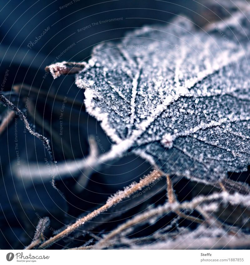 like a leaf falling from a tree. Nature Winter Ice Frost Snow Plant Leaf Autumn leaves Rachis Lie Dark Cold Beautiful Gloomy Blue White Moody Sadness