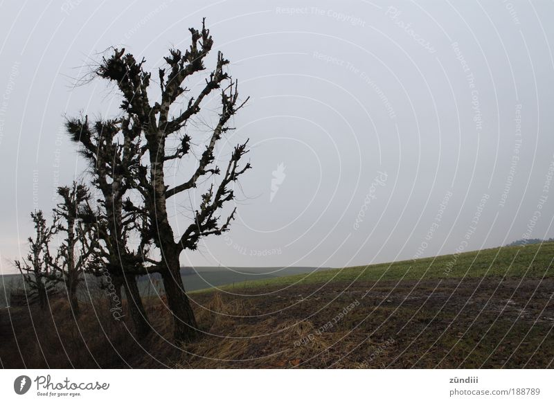 Nature Tree Cold Autumn Meadow Freedom Sadness Landscape Field End Hill Arrange Row of seats Eternity Bleak Autumnal