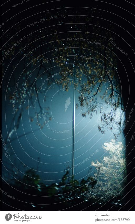 Nature Tree Forest Autumn Dark Environment Park Art Glittering Tall Energy Authentic Safety Illuminate Uniqueness Thin