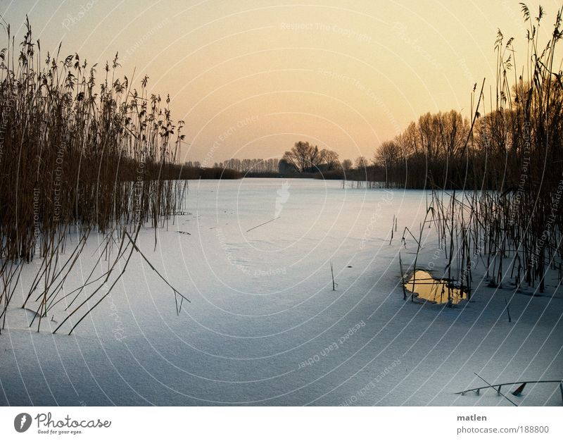 twilight Winter Snow Landscape Cloudless sky Beautiful weather Ice Frost Lakeside Pink White Serene Calm Common Reed ice hole Fishpond Twilight Subdued colour