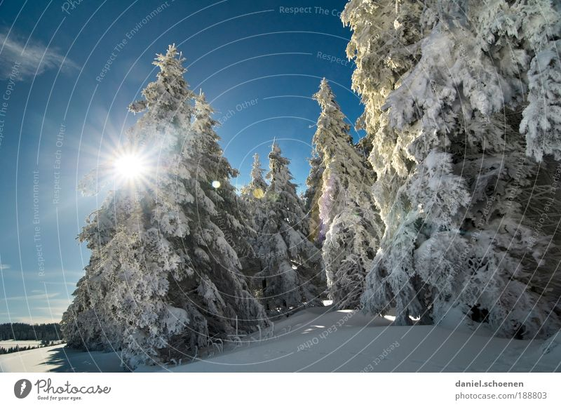 Winter for everyone, this year! Vacation & Travel Tourism Trip Snow Winter vacation Environment Nature Landscape Sunlight Weather Beautiful weather Ice Frost