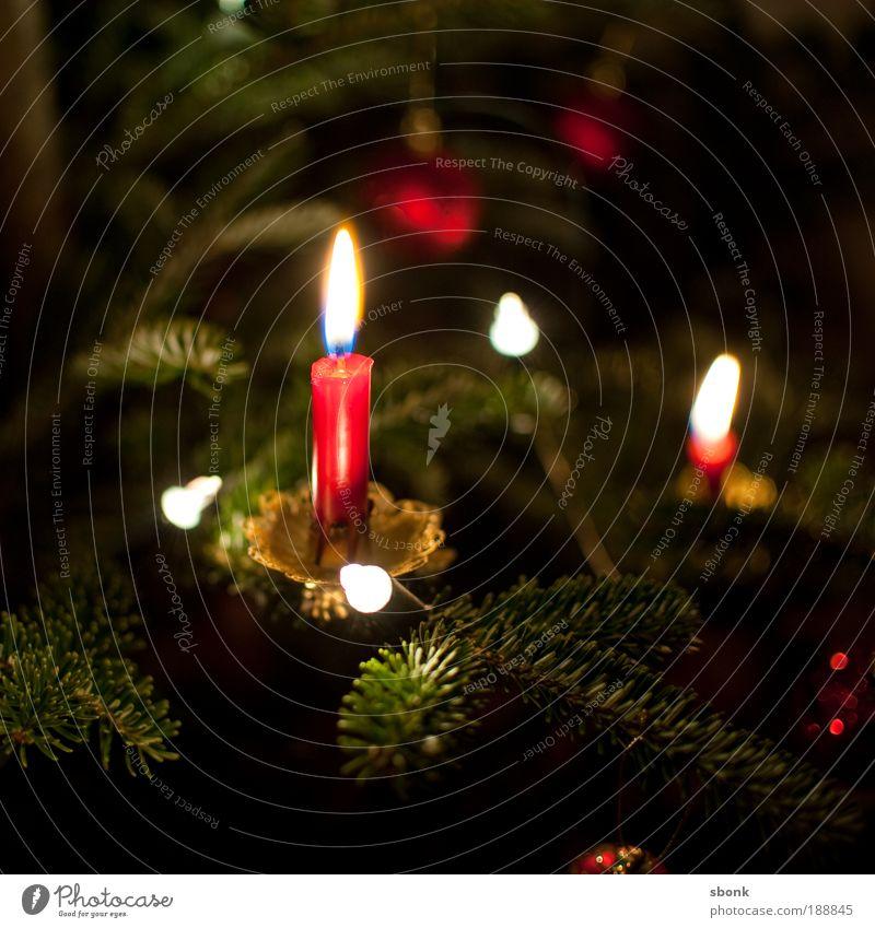 candlelight kitsch Living or residing Flat (apartment) Decoration Candle Observe Glittering Beautiful Kitsch Warmth Emotions Moody Christmas & Advent