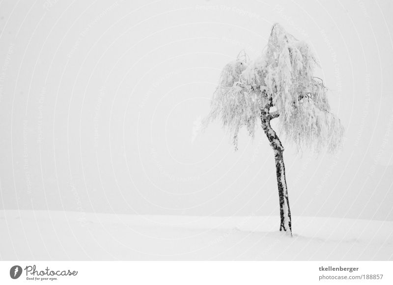 Alone in the wide white expanse Environment Nature Landscape Air Water Clouds Winter Climate Weather Ice Frost Snow Plant Tree Field Hill Alps Esthetic Dark