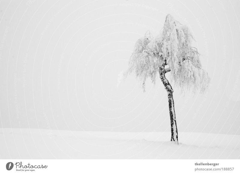 Nature Water White Tree Plant Winter Calm Black Clouds Dark Cold Snow Gray Dream Landscape Air