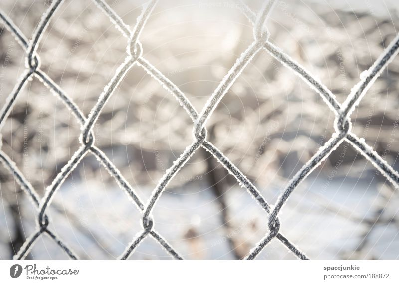 light Nature Landscape Ice Frost Snow Metal Crystal Freeze Captured Grating Fence Wire netting Wire netting fence Colour photo Exterior shot Deserted Light