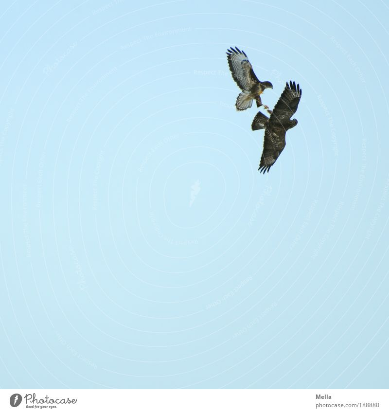 Nature Blue Animal Air Moody Power Bird Environment Flying Free Dangerous Threat Wild Natural Brave Wild animal