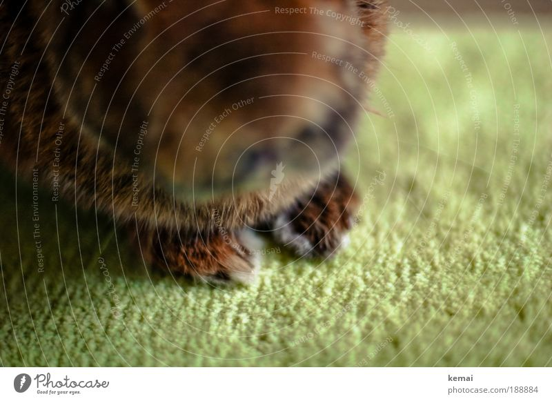 Rabbit paws II Animal Pet Animal face Pelt Claw Paw Hare & Rabbit & Bunny pygmy hare 1 Sit Brown Green Love of animals Be confident Carpet Floor covering
