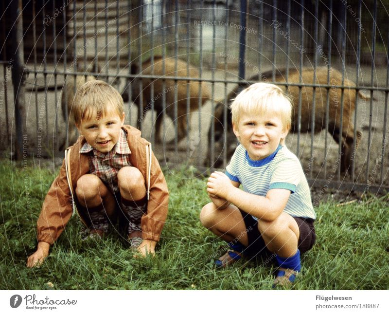Two wild pigs Leisure and hobbies Playing Boy (child) Brothers and sisters Animal Wild animal Exceptional Blonde Vacation & Travel Wild boar Swine Zoo Enclosure
