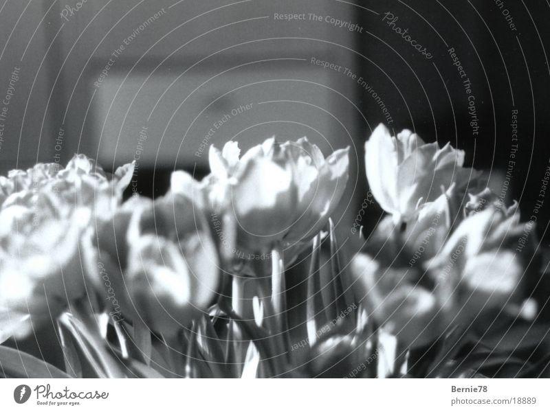Tulip Vase Flower Living or residing Black & white photo Decoration