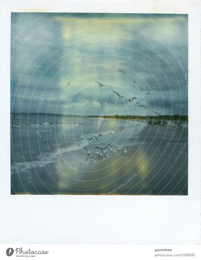 Landscape and nature Polaroid shows sea and flying seagulls Vacation & Travel Tourism Trip Freedom Summer Beach Ocean Waves Human being Group Nature Elements