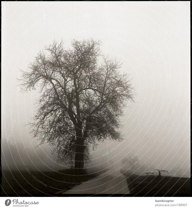 Nature Tree Street Autumn Meadow Lanes & trails Landscape Fog Weather Driving Environment Analog Vintage car